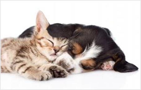 a kitten and a puppy curled up together sleeping